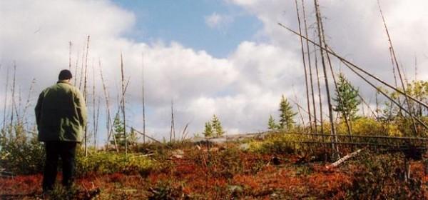 États nordiques, Les de Denis Côté