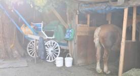 Le Horse Palace - Film de Nadine Gomez (Argus, 2013)