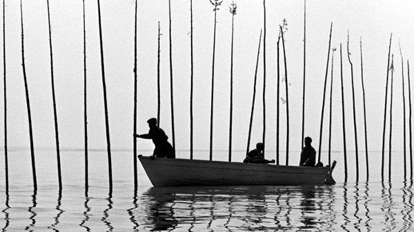 Le plantage des harts dans Pour la suite du monde de Pierre Perrault et Michel Brault (1962, ©ONF)