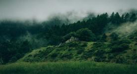 Une forêt verdoyante et brumeuse : visuel du film Les Affamés de Robin Aubert (source : site web du film)