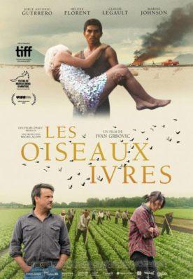 Les oiseaux ivres - affiche du film d'ivan Grbovic (les quatre personnages du films entourent le titre placé au milieu de l'image)